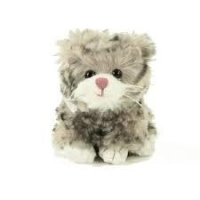 Grå katt från Bukowski