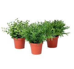 Konstgjord grön miniväxt