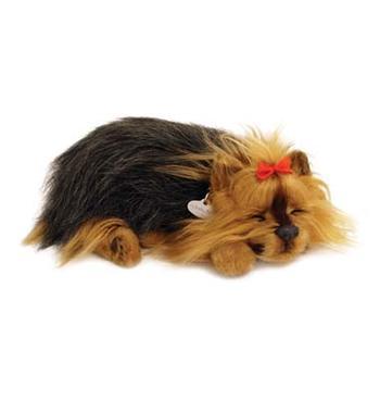Leksakshund Yorkshire terrier