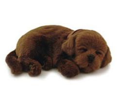 Hundvalp Labrador brun