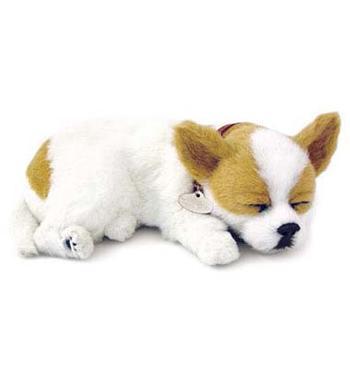 Leksakshund Chihuahua